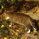 猫のしつけに霧吹きは効果ある?やり方や注意しなければならない点は?